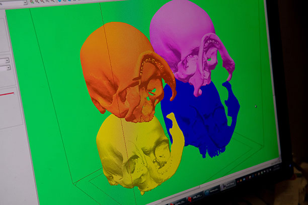 3D scan of 4 skulls ready for printing